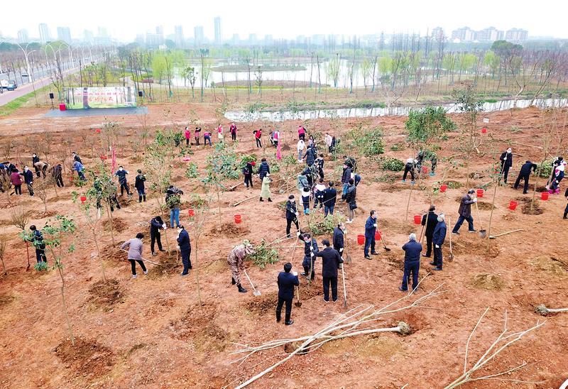 市四大班子领导参加义务植树活动 池州林长林建设启动仪式同时举行