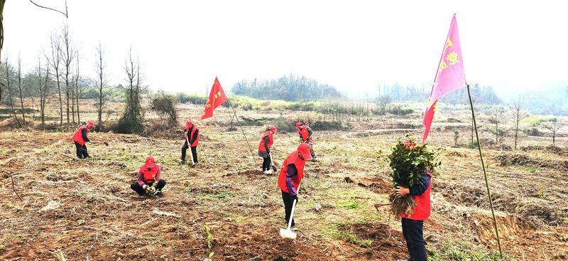 植樹造林綠化家園