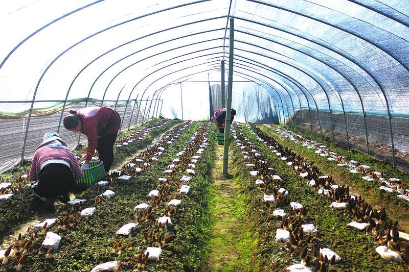 发展特色农业 赋能乡村振兴