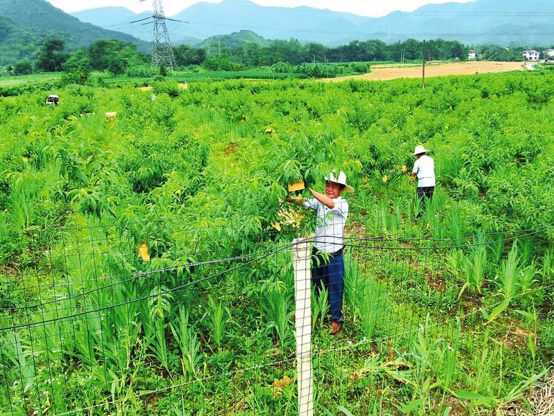 发展特色产业 助力乡村振兴