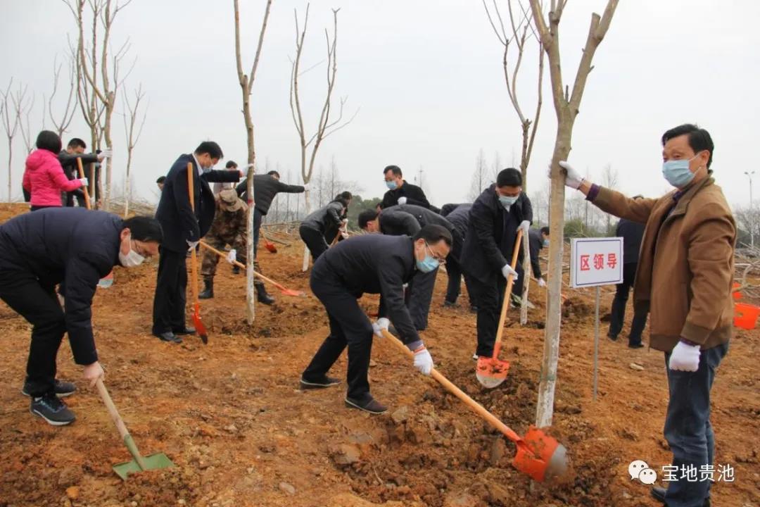 """贵池区开展""""创建全国林长制改革示范区""""林长林建设植树活动"""