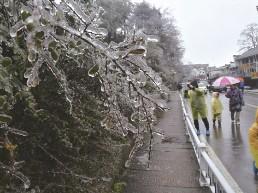 2019年第一场雨凇降临九华山