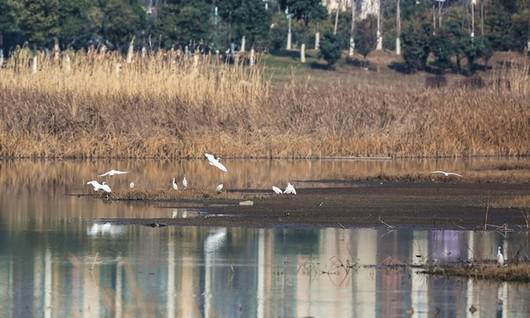 湿地公园1.jpg