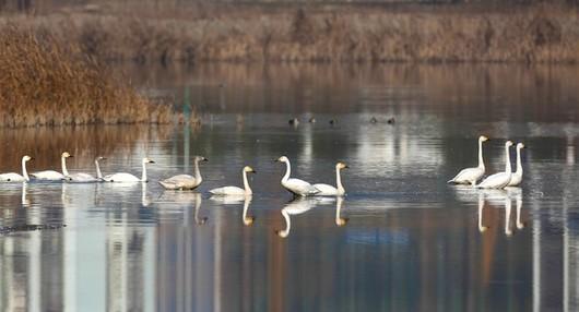 湿地公园2.jpg