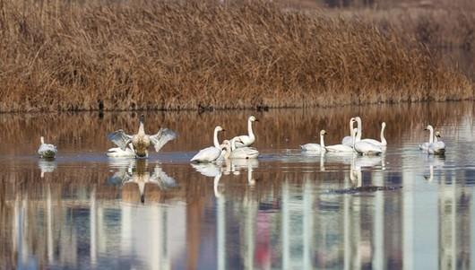 湿地公园3.jpg