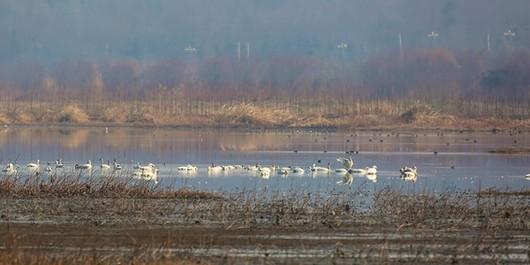 湿地公园4.jpg