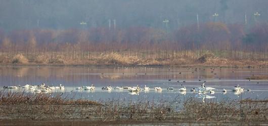 湿地公园5.jpg